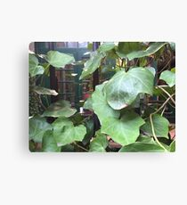 NYC, Vines in the Village Canvas Print