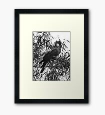 Carnaby Cockatoo  Framed Print