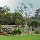 Royal Botanic Gardens Sydney by Eve Parry