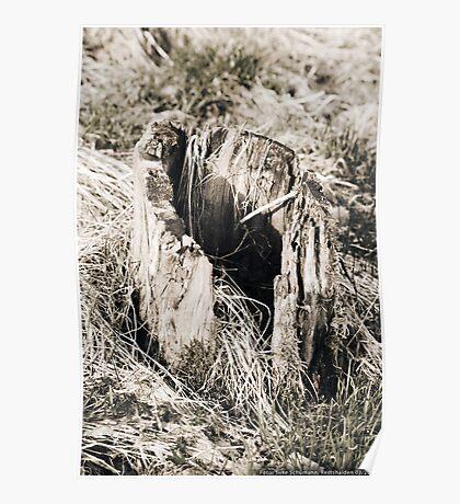 Hollow Tree Stump  VRS2 Poster