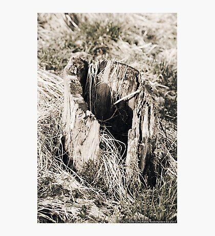 Hollow Tree Stump  VRS2 Photographic Print