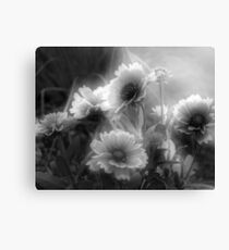 Lienzo Daisy Flowers In Black And White