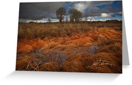 Marsh Melt by Bob Larson