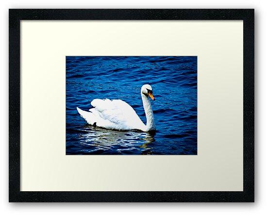 White Swan  VRS2 by vivendulies