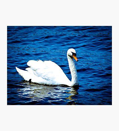 White Swan  VRS2 Photographic Print