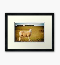 Smiling Sheep in Field Framed Print