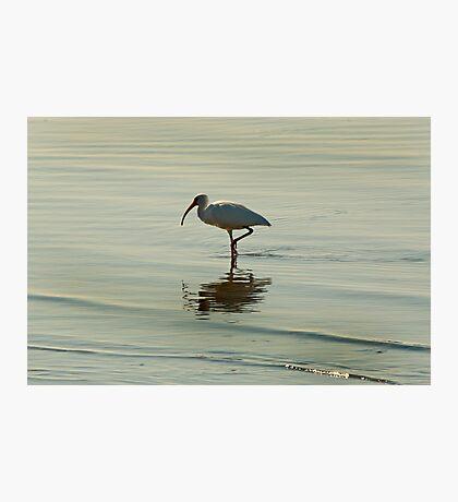 Balancing Act Photographic Print