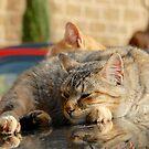 Cat nap by Harald Walker