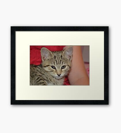 Ella the cat :) Framed Print