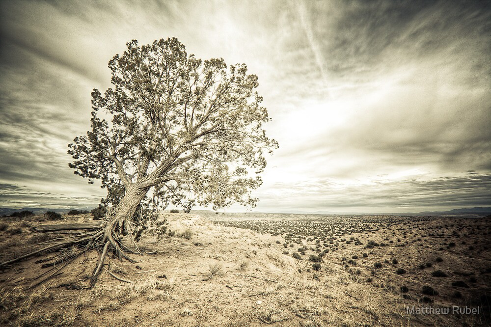 Windtree by Matthew Rubel
