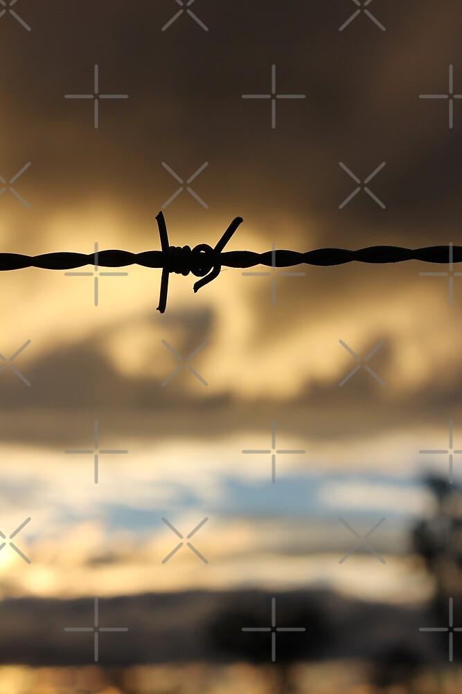 Barbed Wire Sunset by Jennifer Heseltine