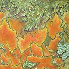 Lichen on a Gravestone-PML0006 by Pat - Pat Bullen-Whatling Gallery