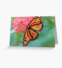 Monarch Macro Greeting Card