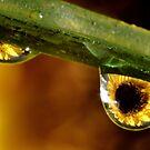 Dew Drops by Robin Black