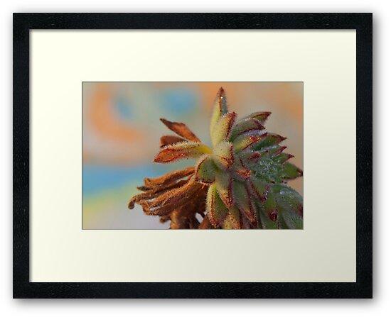 Surprise Succulent by Robyn Selem