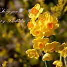 Happy Daffodils by Robyn Selem