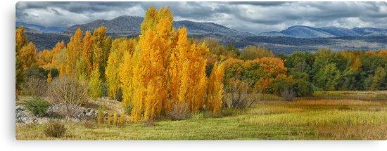 Autumn Splendour - Tumut NSW Australia - The HDR Experience by Philip Johnson