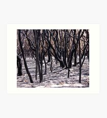 After the fire Art Print