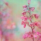 fairy garden by Teresa Pople
