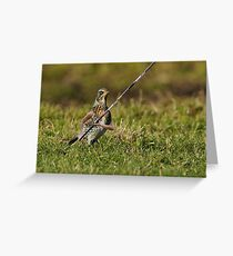 The Track and Fieldfare Greeting Card