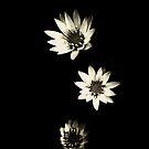 Lotus by PatriciaBarrera