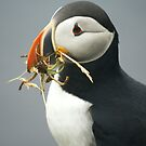 Puffin with nesting materials by Jean Knowles