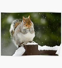 Winter Snack Poster