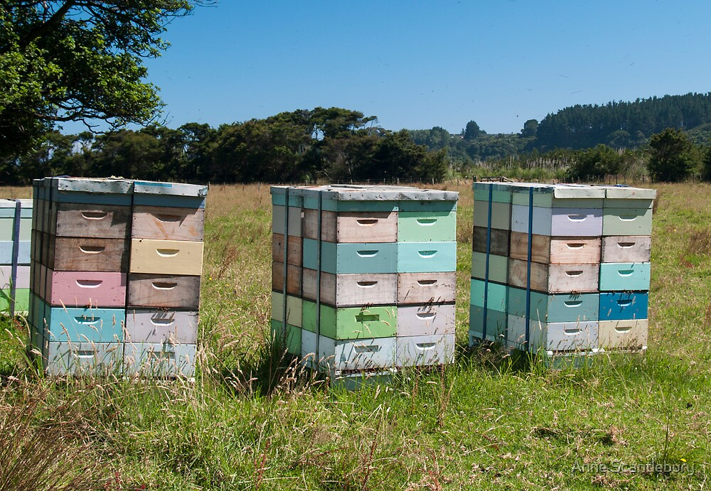 beehives by Anne Scantlebury