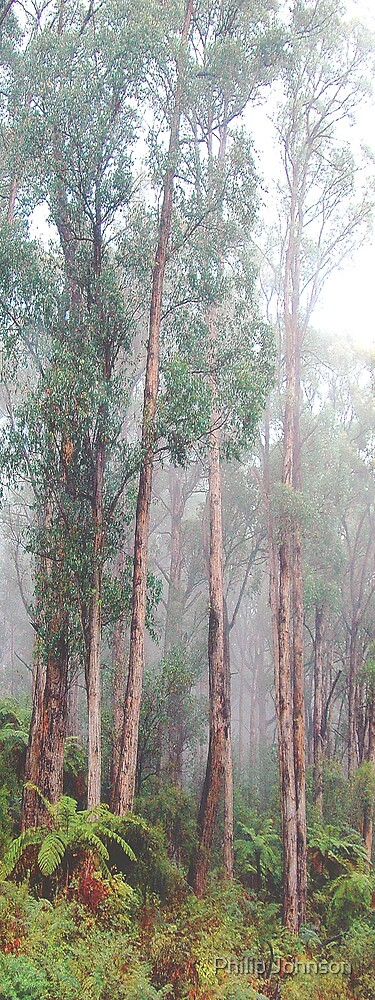 Soldiers In The Mist - Yarra Ranges - The HDR Experience by Philip Johnson