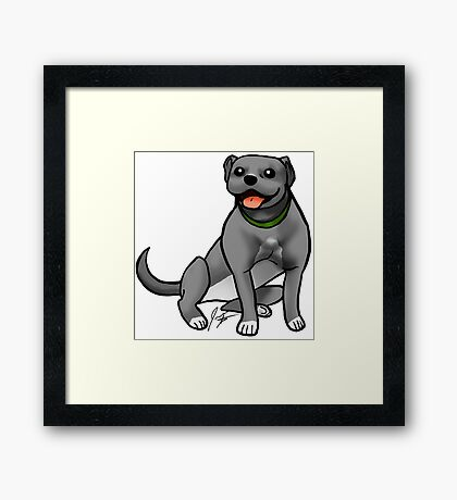 Pitbull - Gray Framed Print