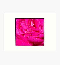 Viciously Hot Pink Rose Art Print