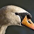 Swan by Daniel Nautré