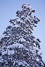 Snow Tree by Tim Topping