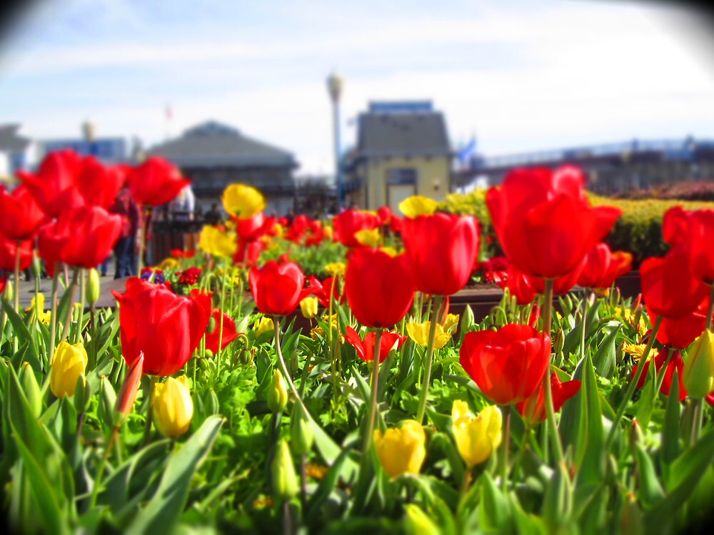 City Flowers by Andrea  Muzzini