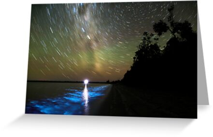 Bioluminescence in the Gippsland Lakes by Phil Hart