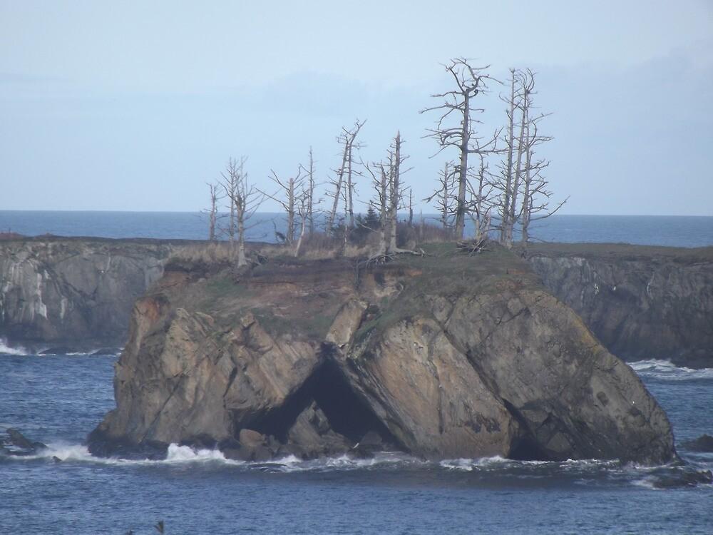 Trees in a Giant Rock by BUNDER