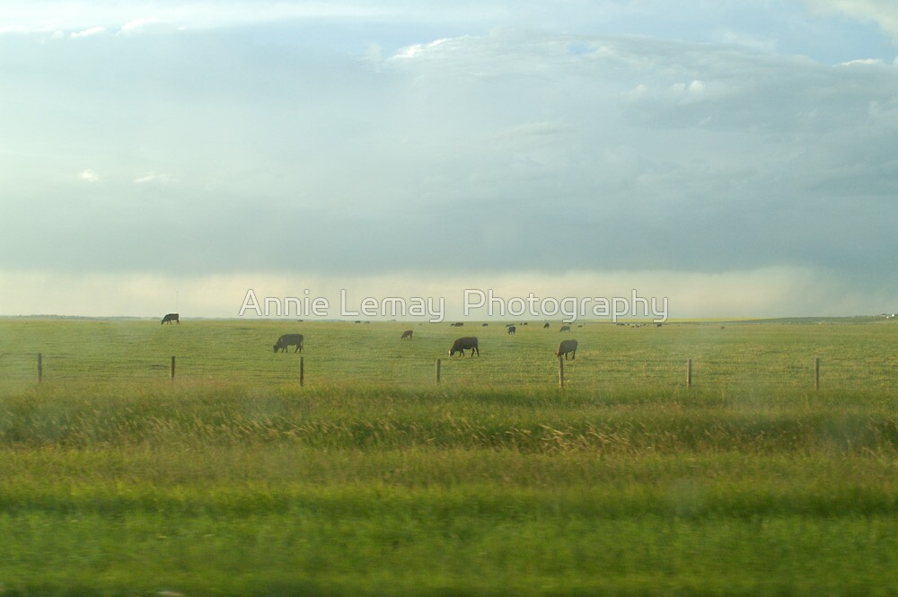 Alberta Farm by Annie Lemay  Photography