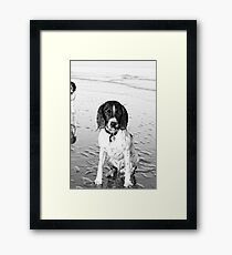 benson on beach Framed Print