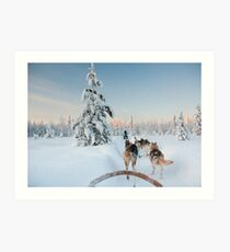 Husky Sledge, Lapland Art Print