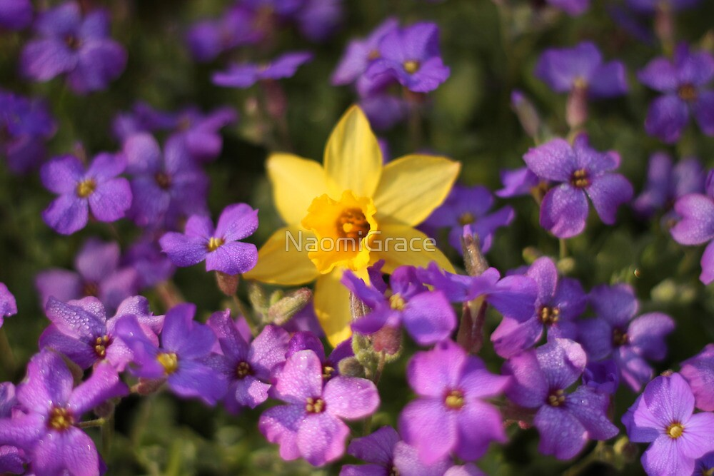Purple and yellow by NaomiGrace