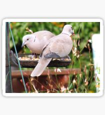 Two Doves Eating Bird Seeds Sticker