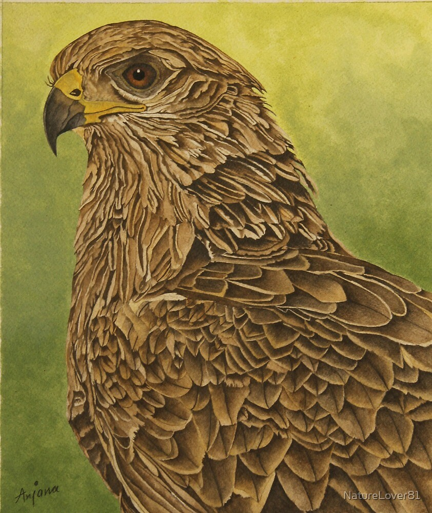 Kite by NatureLover81