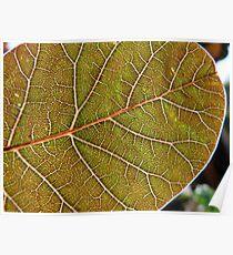 Leaf of Light Poster