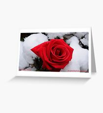 Rose in snow Greeting Card