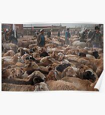 Xinjiang Sheep Shepherd Poster
