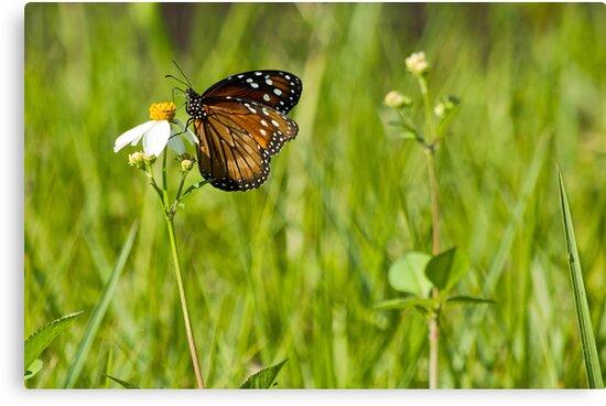 Float Like A Butterfly!  by John  Kapusta