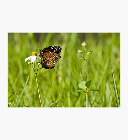 Float Like A Butterfly!  Photographic Print