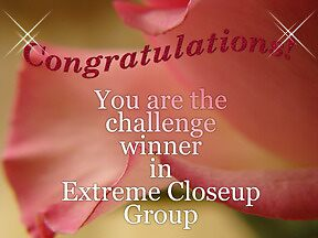 extreme closeup banner for challenge by vigor