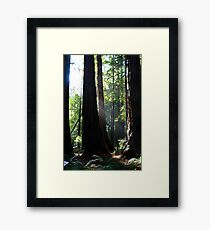Redwood Sun Rays, Muir Woods, California Framed Print