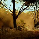 sunset,dust by fazza